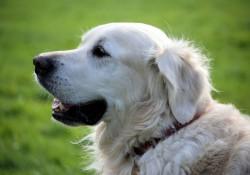 Kvalitets hundefoder fra Essential hos simbasfoder.dk