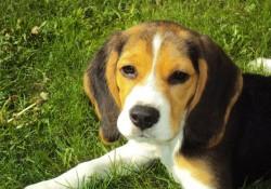 Giv din hund de bedste vilkår med sundt og nærende hundefoder
