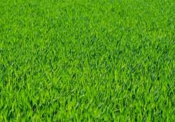Med rullegræs får du hurtigt en flot græsplæne foran dit nybyggede hus